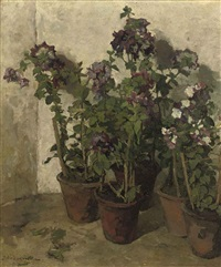 pots with purple flowers by johannes evert hendrik akkeringa