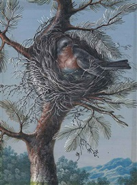 a red-breasted bird nesting in a fir tree and a blue-throated bird nesting in a fir tree (a pair) by christoph ludwig agricola