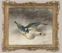 great tits feeding, winter by florance hold