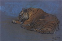 study of a sleeping tiger by john macallan swan