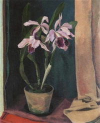 orchideen by heinrich (heiggi) müller