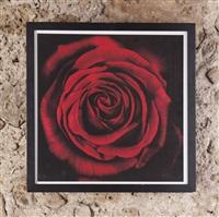 rose by robert longo