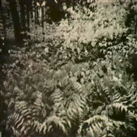 untitled. landscape with ferns in snow, cibachrome by nathan farb