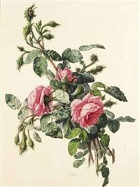 branche de rosier en fleurs by simon saint-jean