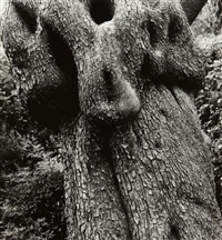 olive tree, corfu 33 by aaron siskind