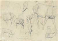etudes de cerfs (study after rosa bonheur) by jules bertrand gélibert