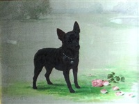 study of a miniature pinscher cross terrier dog in a garden landscape by maud earl