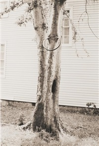 money tree by david hammons