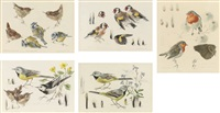 gray wagtails (+ 4 others; 5 works) by mildred eldridge