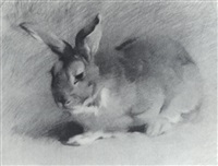 study of a hare by dorothy adamson