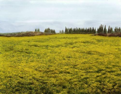 yellow fields by amalia haas
