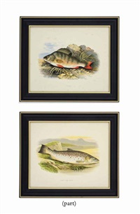 fresh water fish (12 works) by william hougton