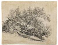 tree study ariccia by johann christian reinhart