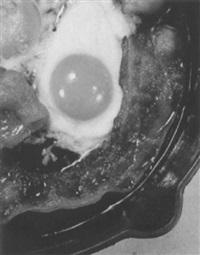ham and eggs by paul heisman