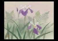 iris by masakazu hashiba