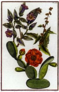 histoire générale...à la quelle on a joint une troisième partie qui traite des plus belles fleurs, telles que des plantes bulbeuses, liacées, caryophilées by daniel rabel