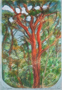 scots pine by brian bourke