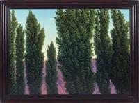 seven lombardi poplars by john beerman