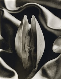 shell in silk by ruth bernhard