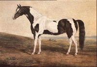 a skewbald stallion in a landscape by edward walter webb