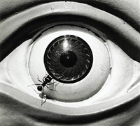 untitled (ant and eye) by david wojnarowicz