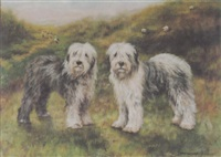 old english sheepdogs by adrienne lester