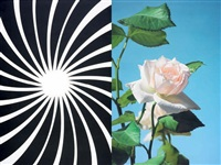 abstract rose by mustafa hulusi