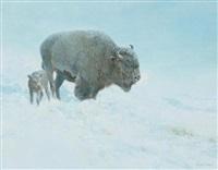 shielding her calf by douglas allen