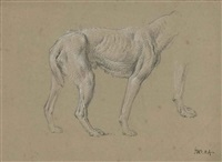 study of a hound by james ward