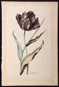 botanical prints from