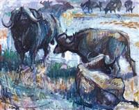 buffalo by zakkie (zacharias) eloff