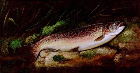 a rainbow trout on a riverbank by thomas g targett