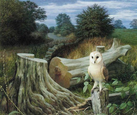 barn owl at dawn eccup by raymond booth