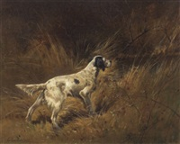 english setter working by louis contoit