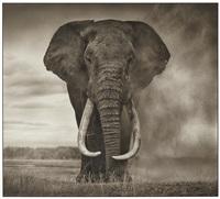 portrait of elephant in dust, amboseli by nick brandt
