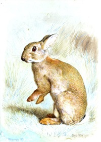 study of a rabbit by frank paton