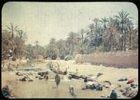 algérie: scène autour d'une oasis à boussa ada (+ 3 others; 4 works) by jules gervais courtellement