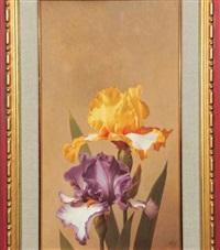 iris germanica by sosuke morimoto