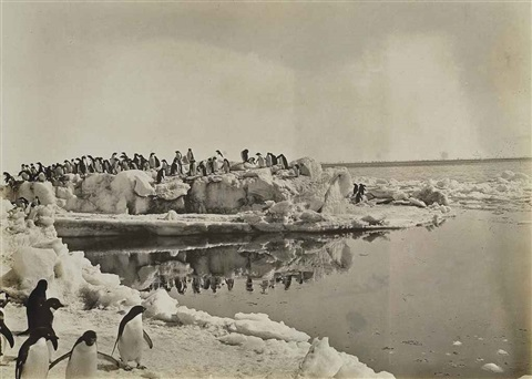 adelie penguins by george murray levick