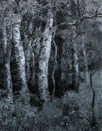 ancient birches by mary nicholena maccord