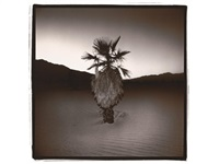 palm #1 by richard misrach