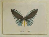 papillon bleu by la roche laffitte