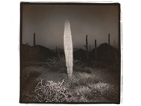 desert cactus by richard misrach