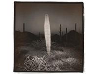 desert cactus by richard misrach