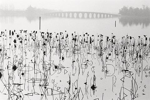 wilted lotus blossoms summer palace kunming lake beijing china by rené burri