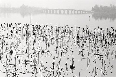 wilted lotus blossoms summer palace kunming lake beijing china by rené burri
