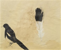 the black and white feather by mary newcomb