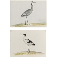 a female crane (+ an avocet; 2 works) by pieter holsteyn the elder