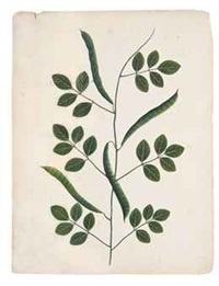 studies of indian plants (4 works) by anonymous-indian (19)