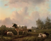 cattle grazing in the pasture by jan bedijs tom